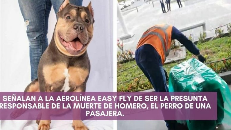 Easy Fly